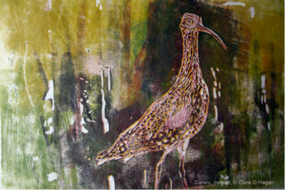 Curlew ireland