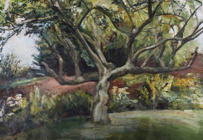 Apple tree - Glastonbury